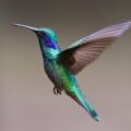 Kolibřík Energie