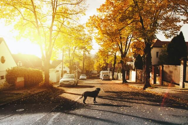 Pes na ulici, sousedská komunita, Free for You (FFY), sleva na elektřinu a plyn