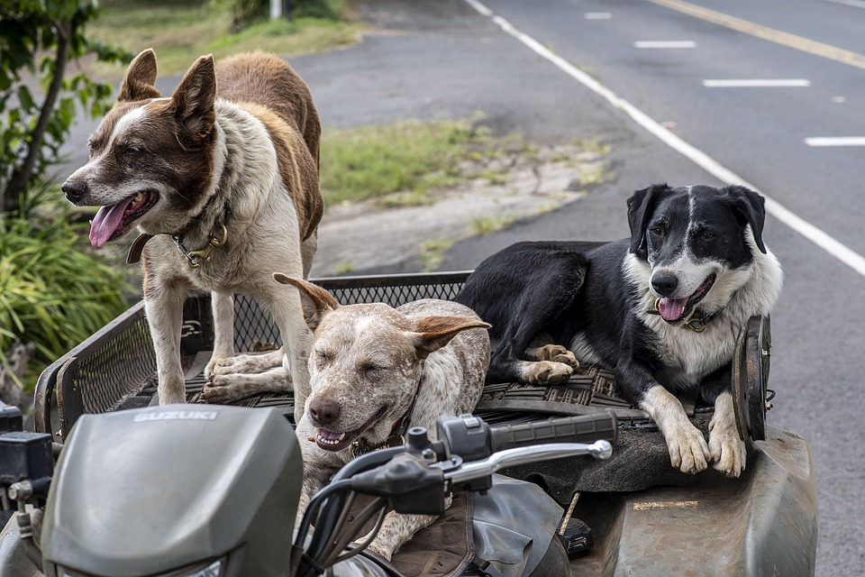 Psi na tažném zařízení