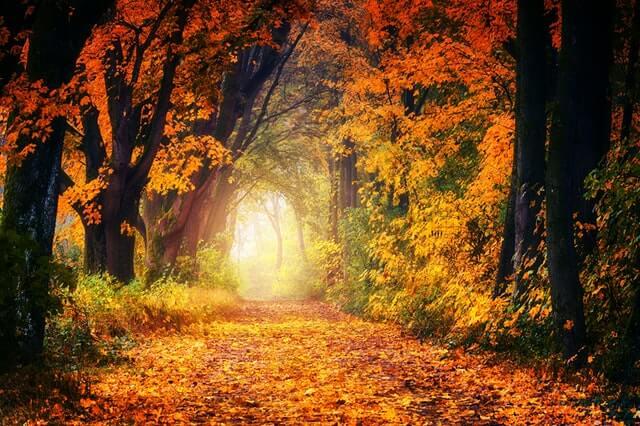 Listopadový les, Europe Easy Energy (3E) zdražuje od 1. 11. 2021